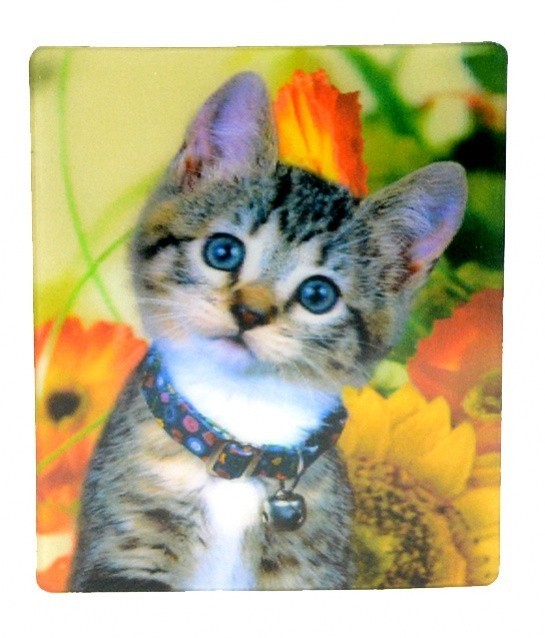těsný růžový kočička obrázek